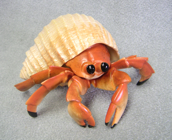 Giant Hermit Crab no Shell Pet Hermit Crab Without Shell